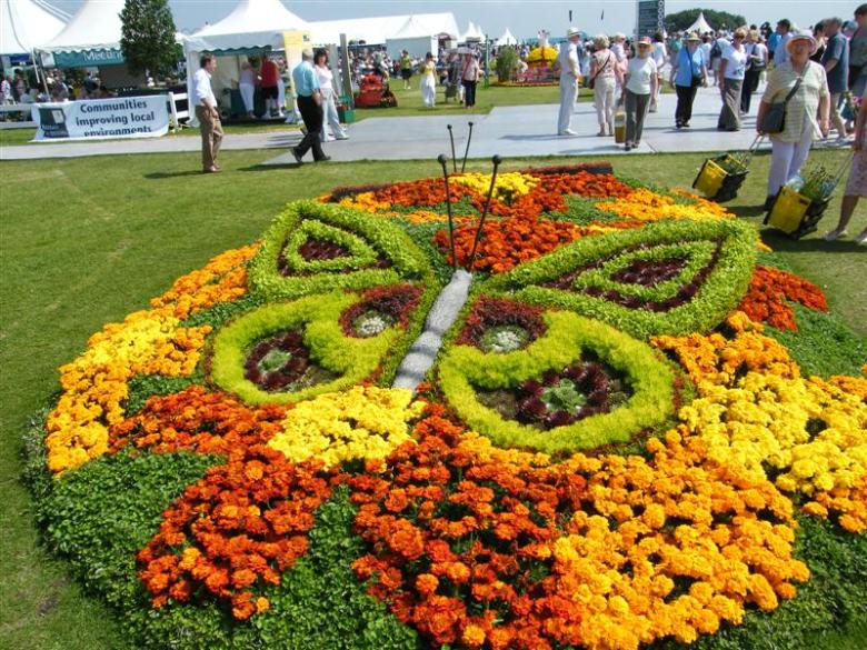 Бархатцы в комбинации с другими растениями в ландшафтном дизайне