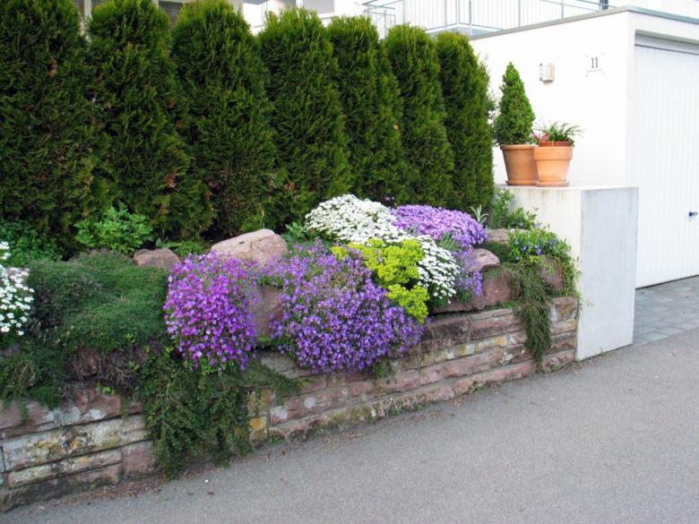 Живая изгородь из туй в соседстве с различными цветами