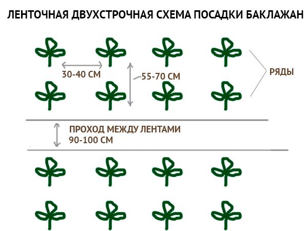 Схема посадки баклажанов в открытый грунт