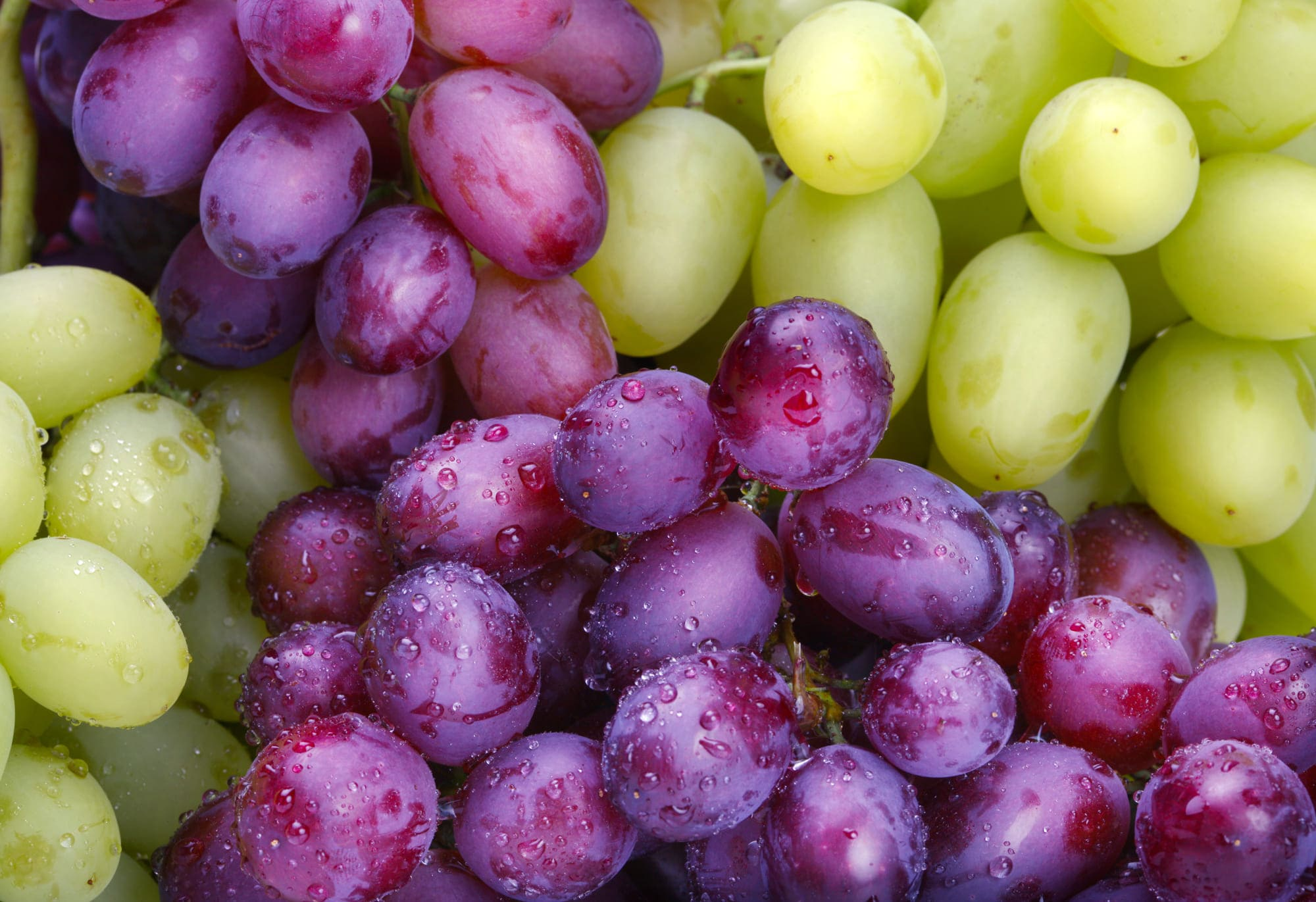 Посадка винограда. Что выбрать черенок или саженец.