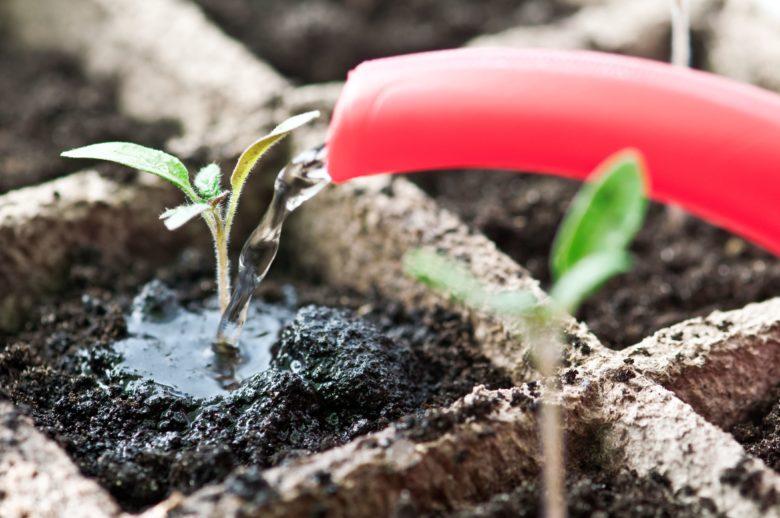 Чем подкормить рассаду баклажан чтобы получить хороший урожай