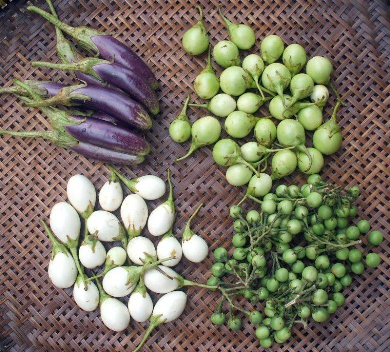 Разные по форме и цвету ягоды баклажана