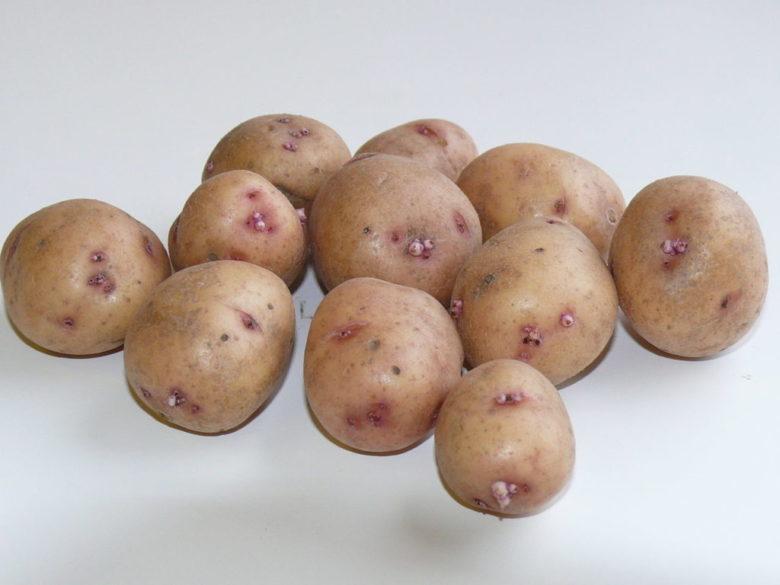 Собираем урожай картофеля