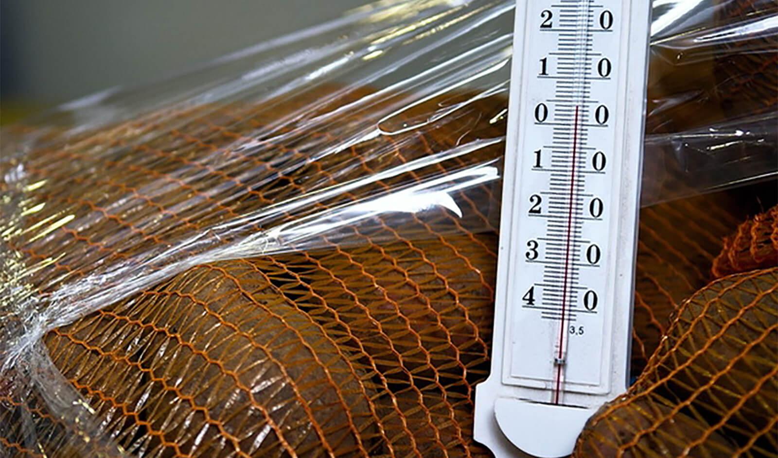 При какой температуре и как хранить картошку на балконе зимой