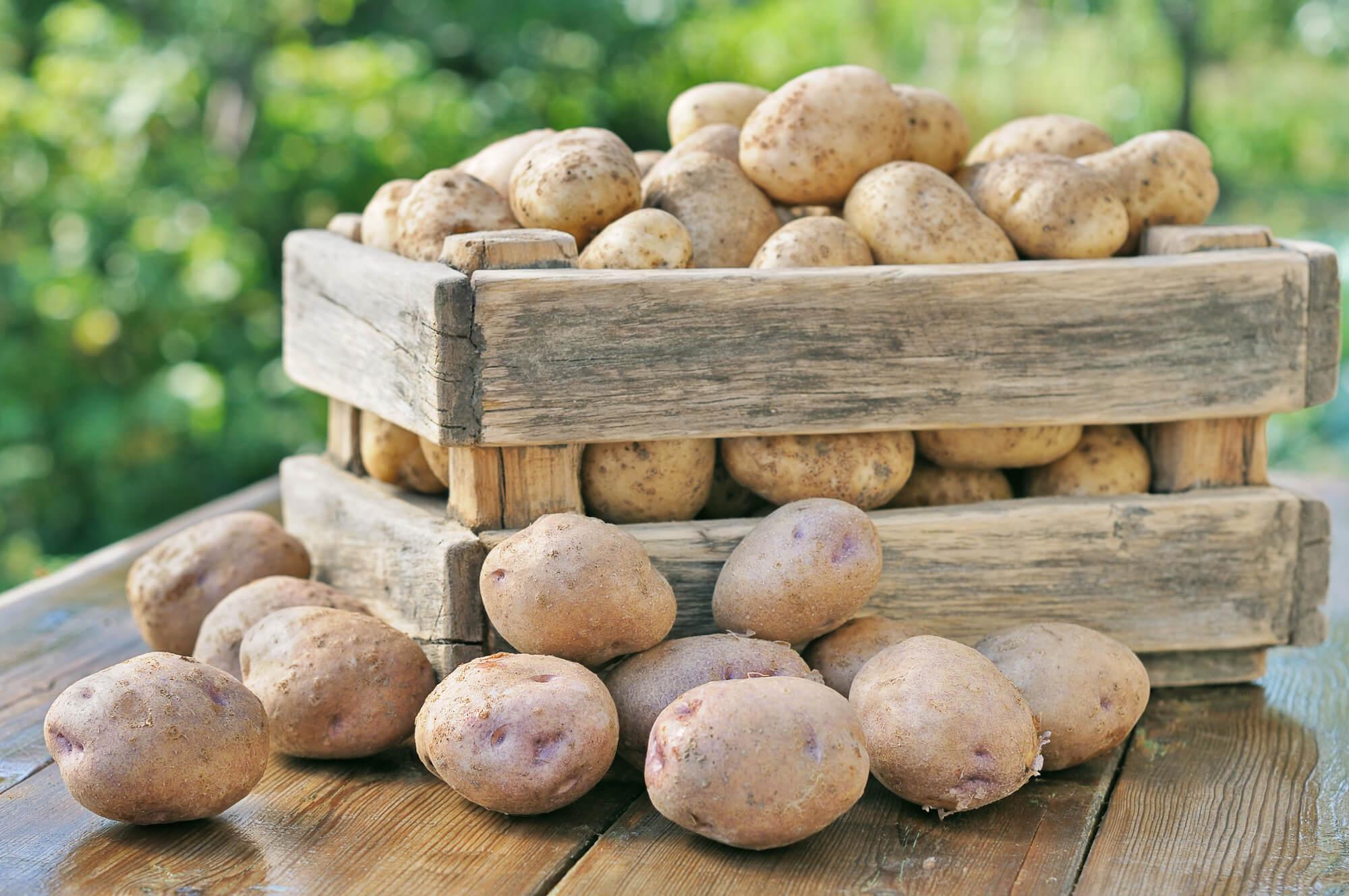 Утепленный ящик для картошки своими руками