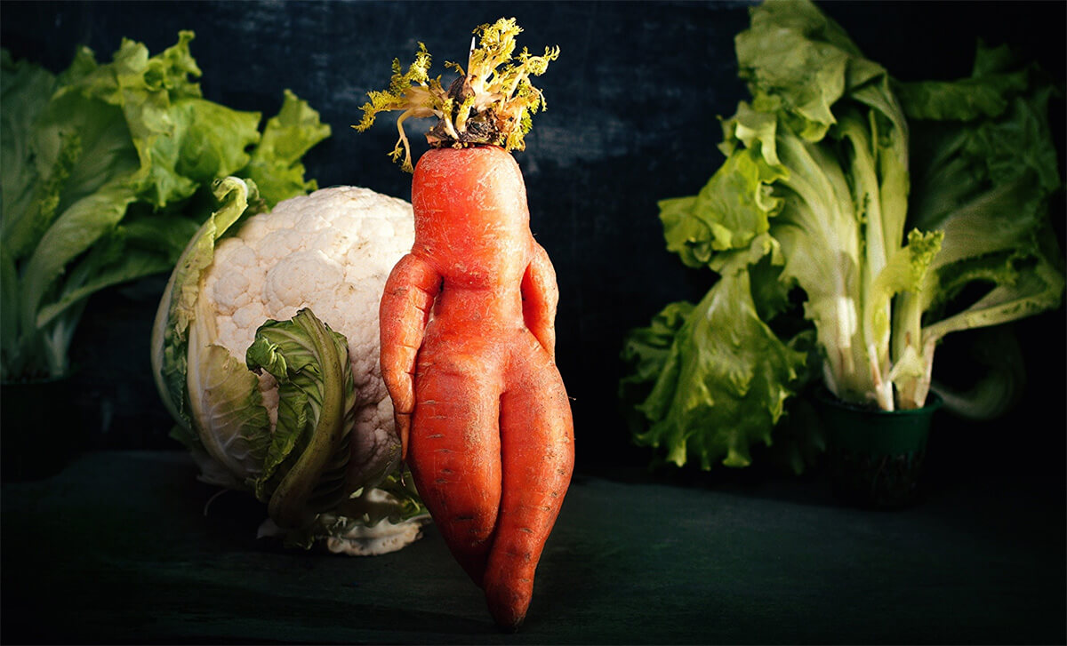 Как растет морковь: это растение или нет, строение и описание моркови, это фрукт или овощ