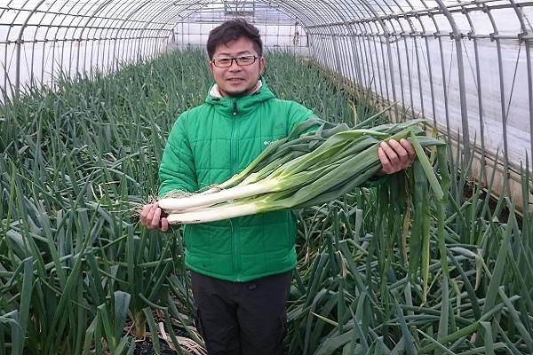 Китайский лук вырастает до 130 см в высоту