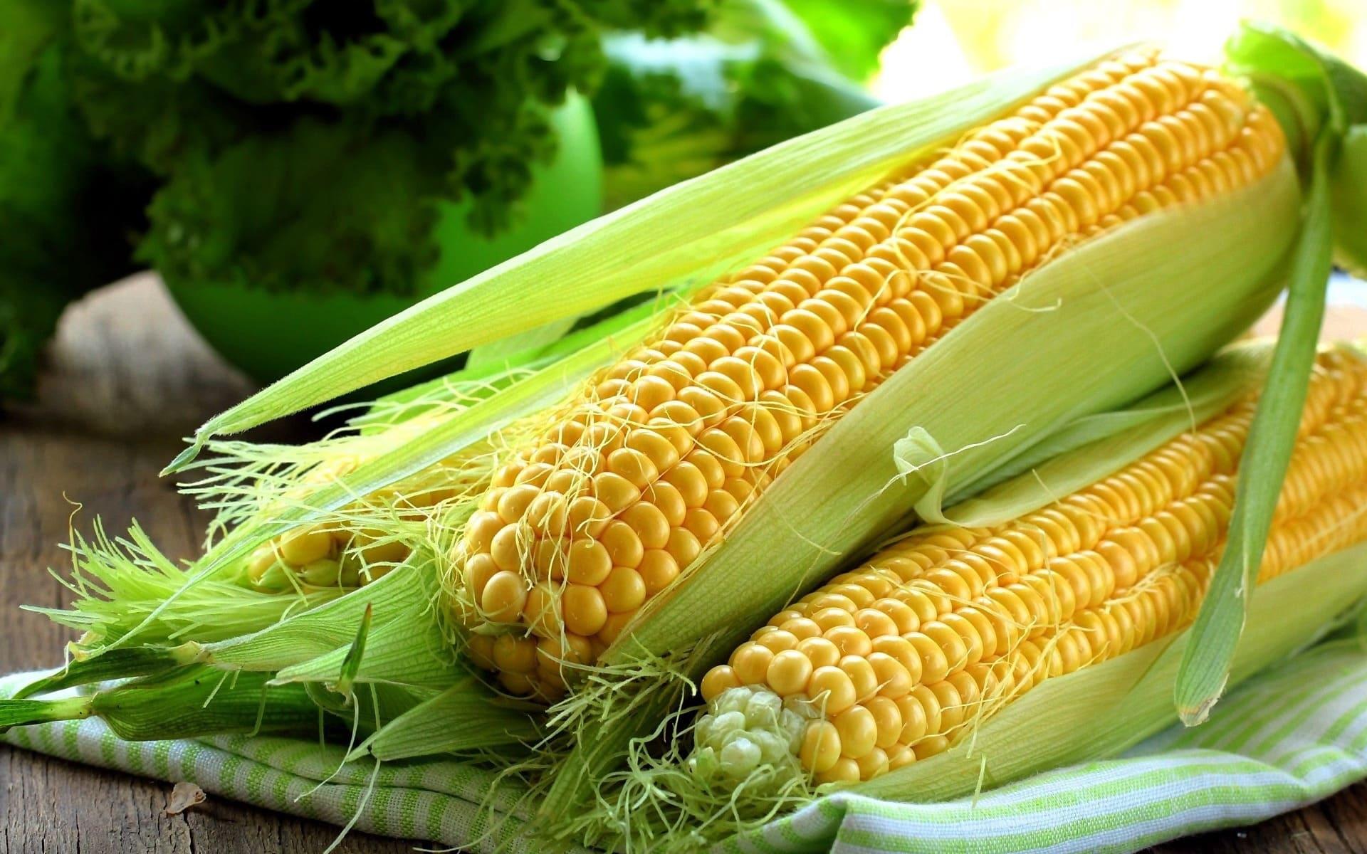 Кукуруза овощ или фрукт: к какому семейству и виду относится