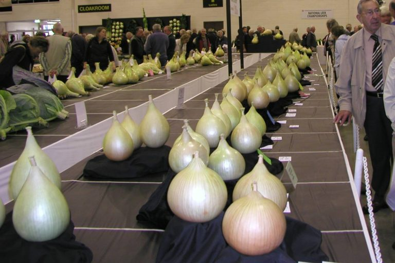 На международный выставках можно увидеть луковицы массой более 1 кг