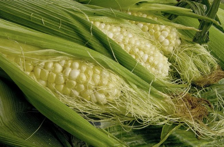 Початки кукурузы с рыльцами