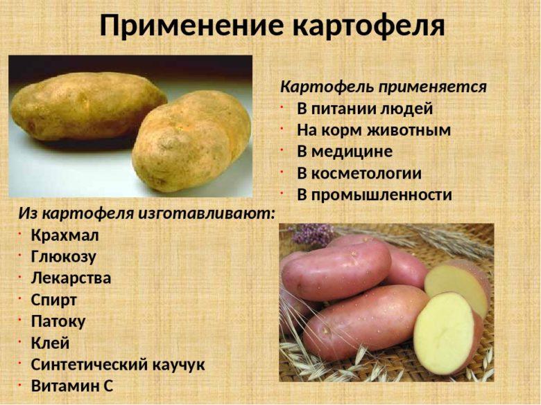 Применение картофеля
