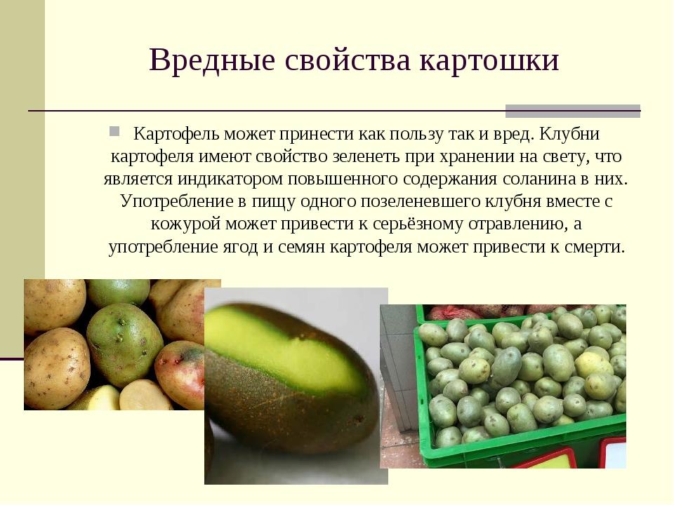 Вредные клубни картофеля