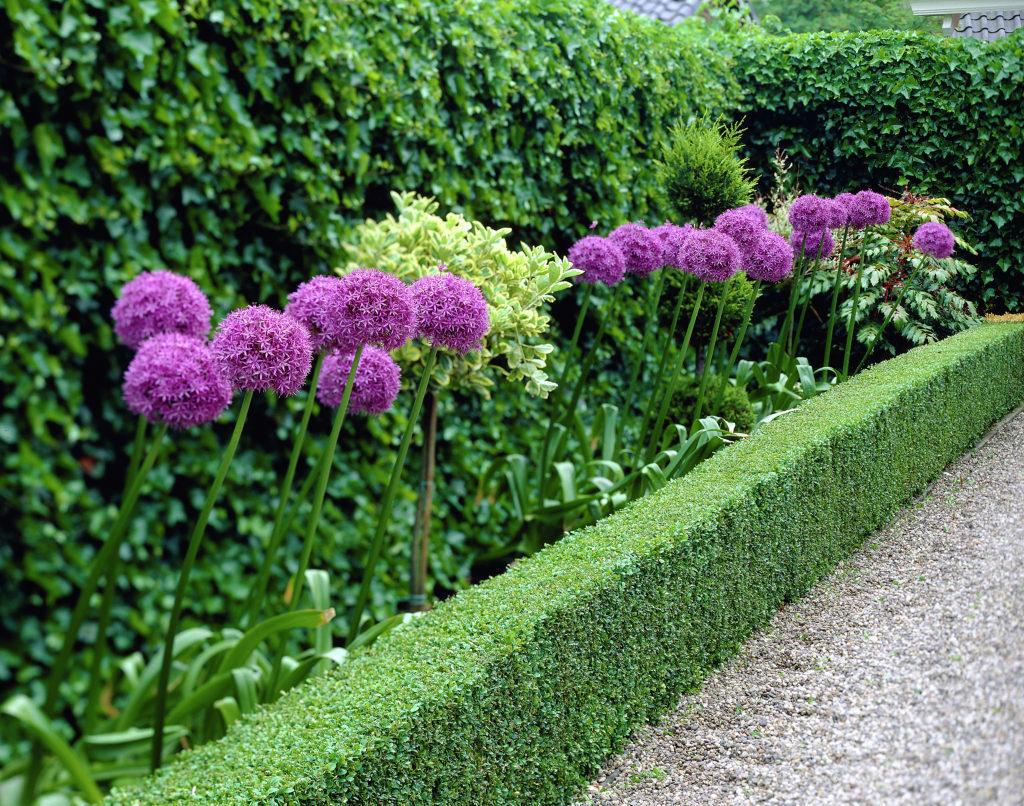 Декоративный лук в ландшафтном дизайне
