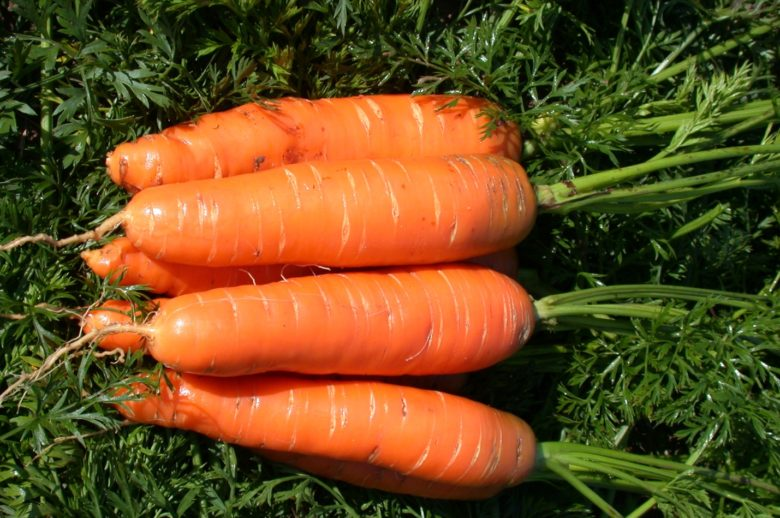 Морковь {amp}quot;Детская сладкая{amp}quot;