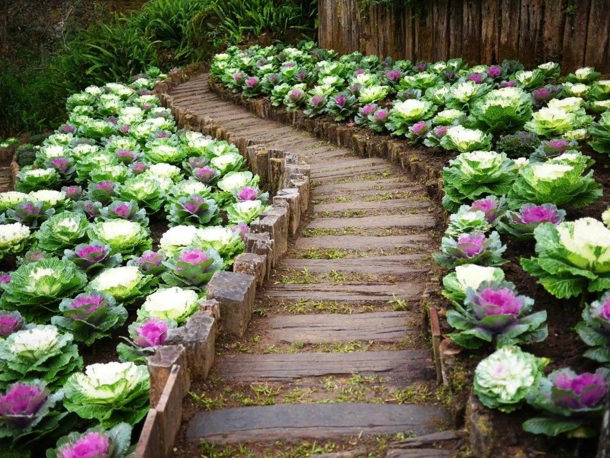 Дорожка украшенная декоративной капустой