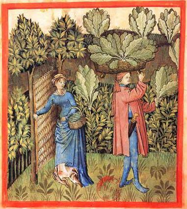 Собирая урожай капусты, автор Tacuinum Sanitatis, 15-ое столетие