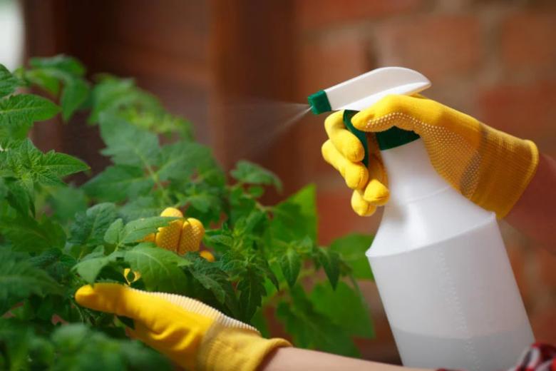 внекорневая подкормка рассады томатов