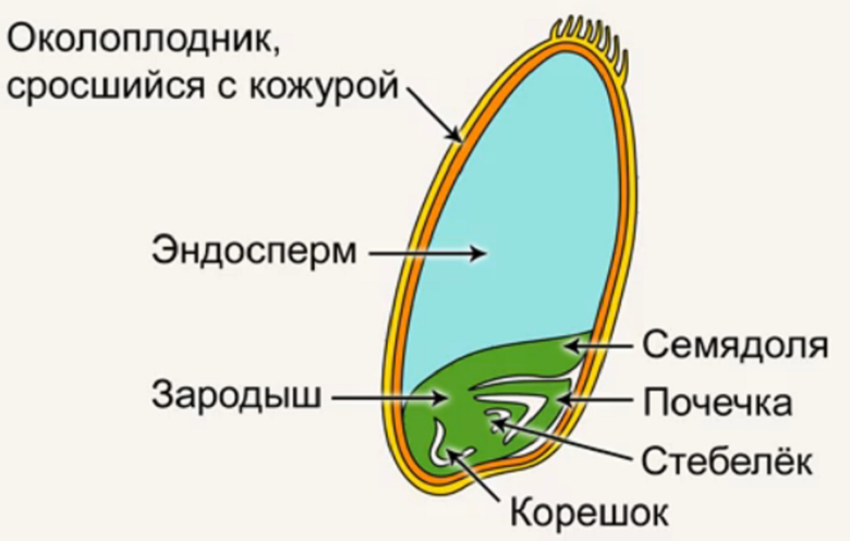 Как на уроке биологии