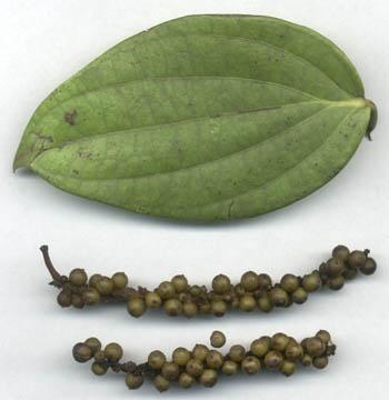 Лист и плоды черного перца