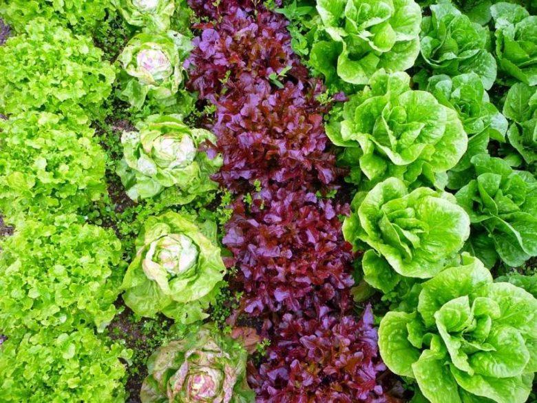 Выбирайте правильных соседей для салата